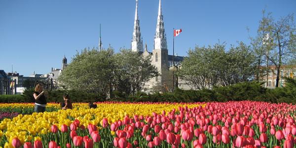 Ottawa, mais conhecida na primavera como a Capital das Tulipas