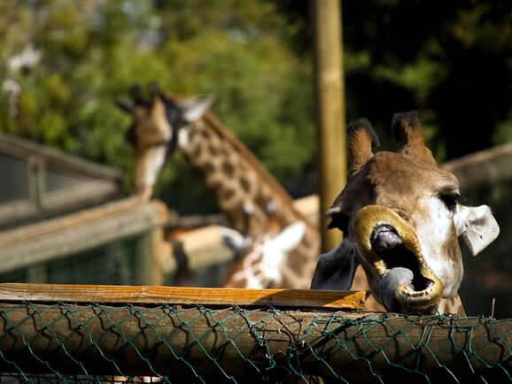 Zoologico de Santiago4