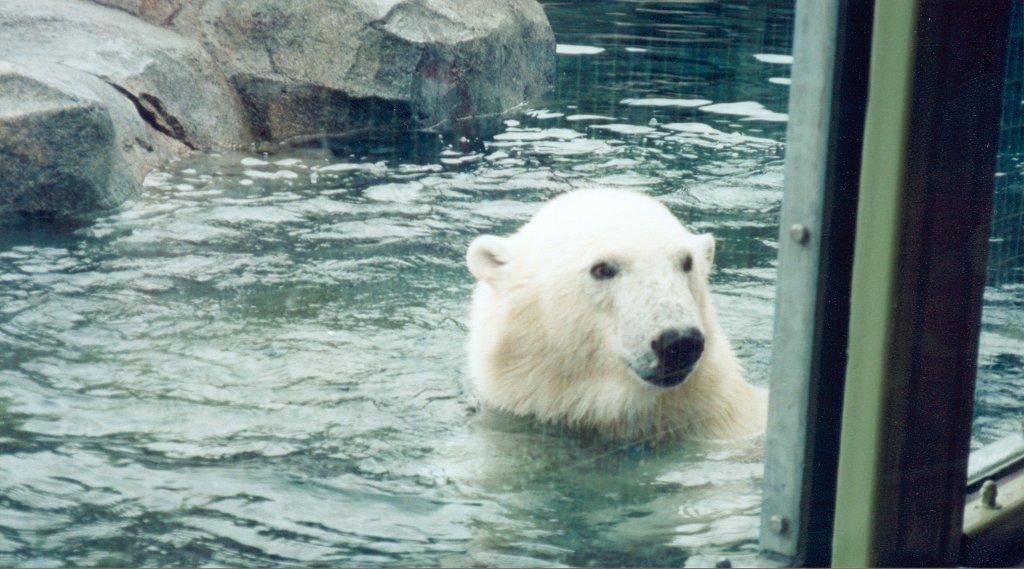 Alaska-Zoo-D-Scott-02