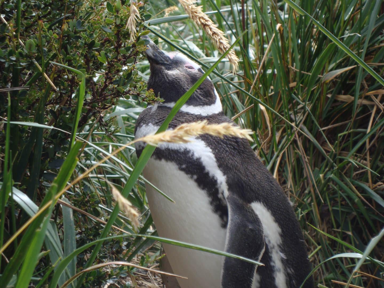 Ushuaia Pinguineira 01