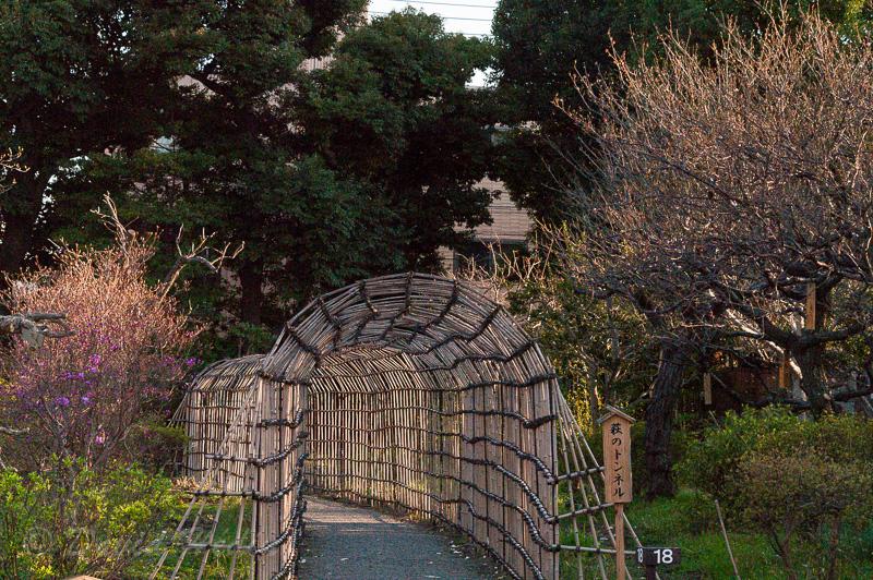 Jardin de Mukojima Hyakka-en. Foto: David Hédin